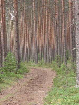 Evon Metsäopisto